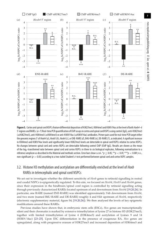 Histone H3 methylation and acetylation are differentially enriched at the level of Hoxb RAREs in telencephalic and spinal cord NSPCs | Page 8