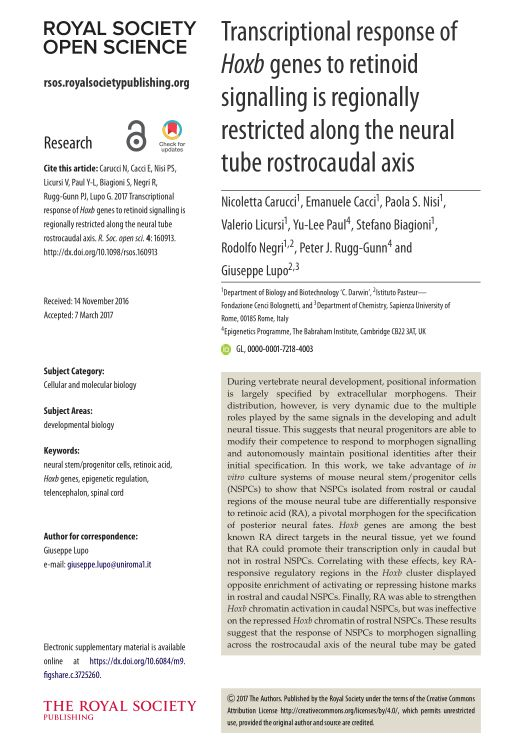 Transcriptional response of Hoxb genes to retinoid signalling is regionally restricted along the neural tube rostrocaudal axis