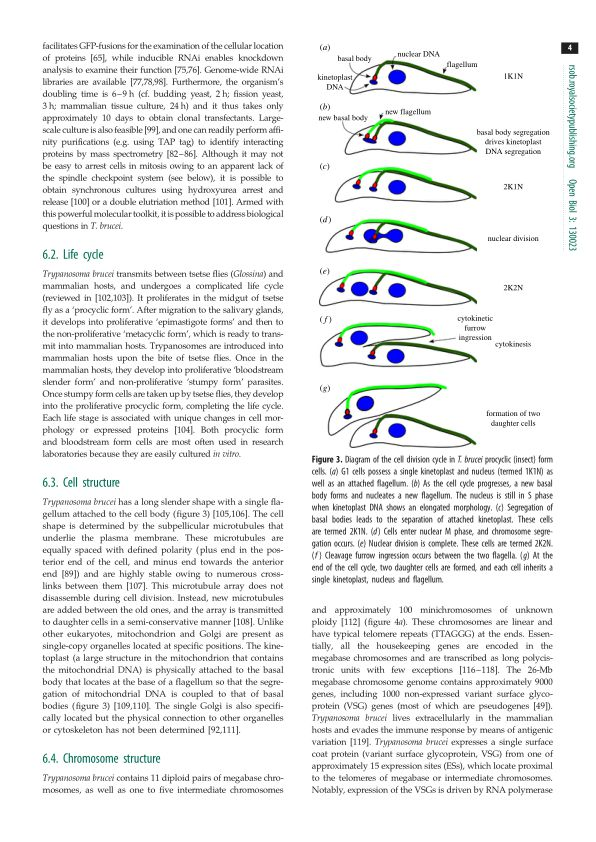 Life cycle | Page 4