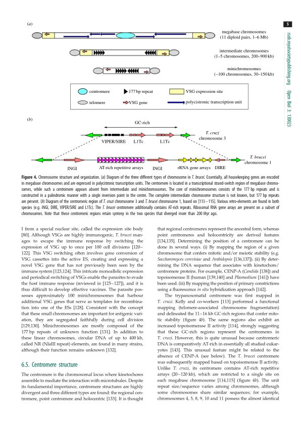 Centromere structure | Page 7