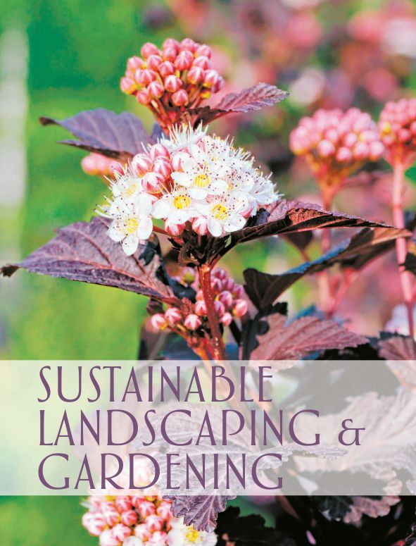 SUSTAINABLE LANDSCAPING & GARDENING   Page 5