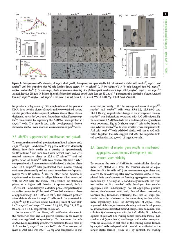 AMPK[alpha] suppresses cell proliferation and growth   Page 3
