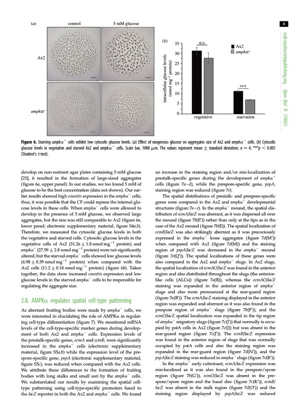 AMPK[alpha] regulates spatial cell-type patterning   Page 8
