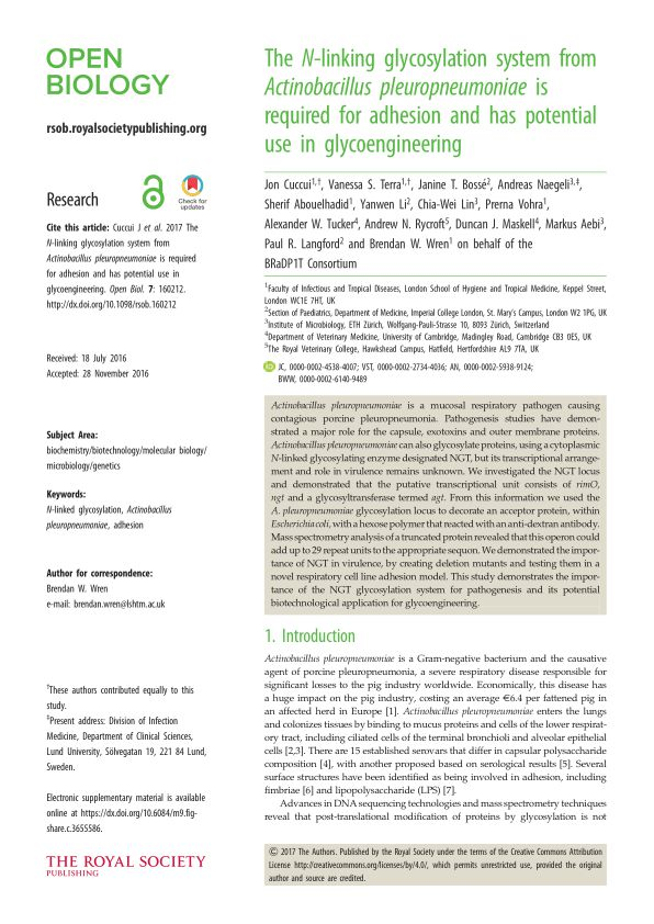 The N-linking glycosylation system from Actinobacillus pleuropneumoniae is required for adhesion and has potential use in glycoengineering