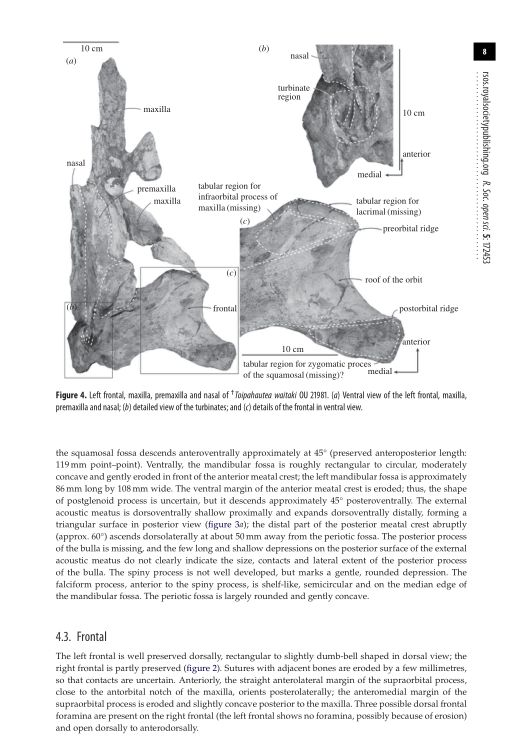 Frontal | Page 6