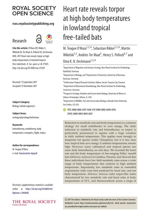 Heart rate reveals torpor at high body temperatures in lowland tropical free-tailed bats