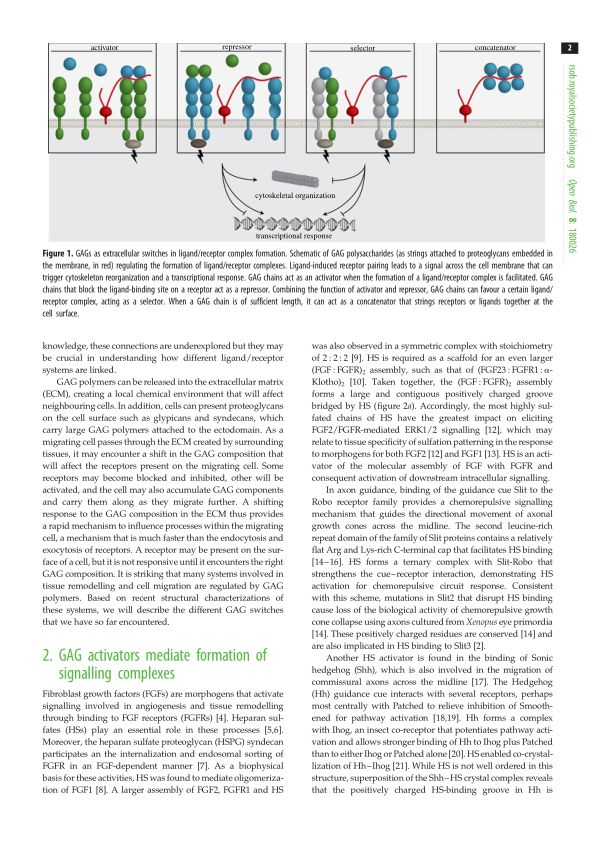 GAG activators mediate formation of signalling complexes | Page 0
