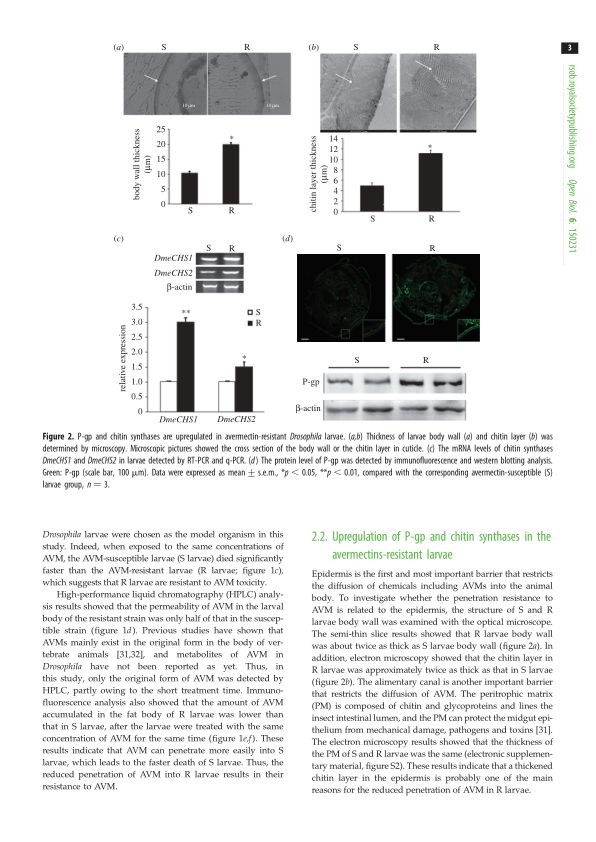 Upregulation of P-gp and chitin synthases in the avermectins-resistant larvae   Page 2