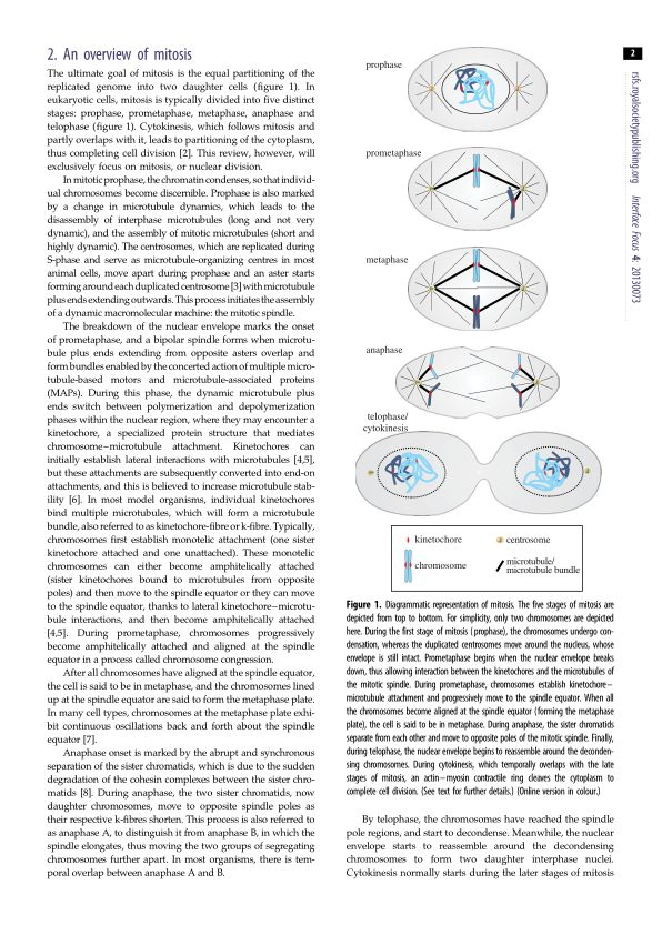 An overview of mitosis | Page 0