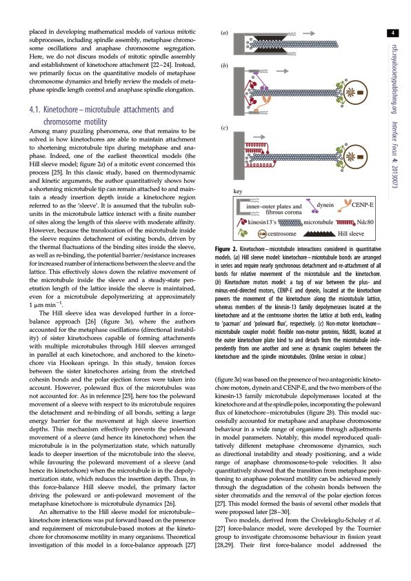 Kinetochore-microtubule attachments and chromosome motility | Page 3