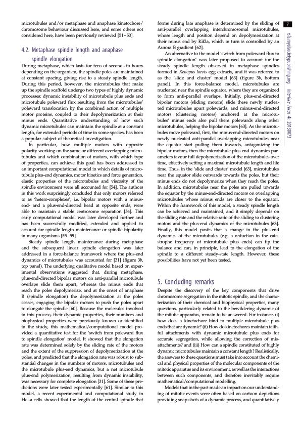 Metaphase spindle length and anaphase spindle elongation | Page 4